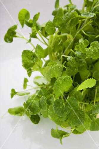 Fresh watercress with drops of water