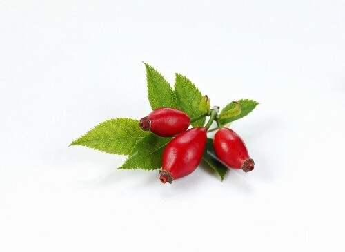 Rose hips with leaves