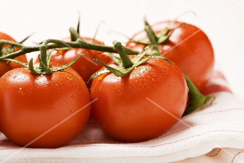 Tomatoes on the vine (close-up)