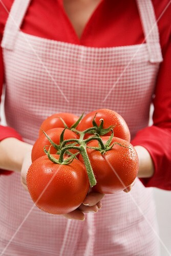 Woman holding vine tomatoes with drops of water