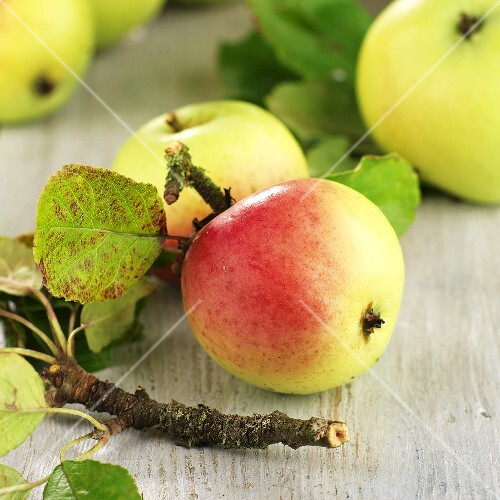 Organic Elstar apples with twigs and leaves