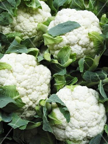 Lots of cauliflowers