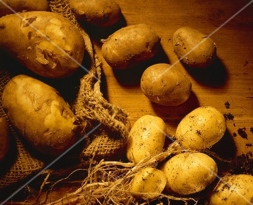 New potatoes with soil and jute sack