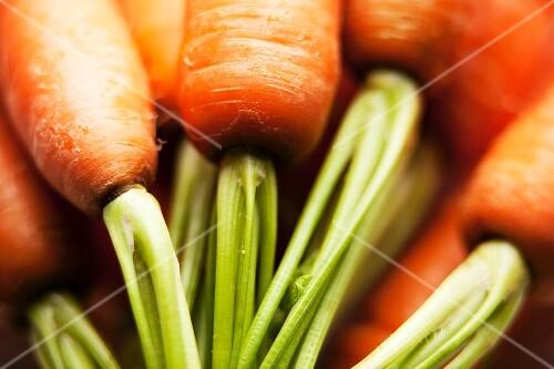Carrots (close-up)