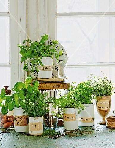 Various herbs in pots on a window sill