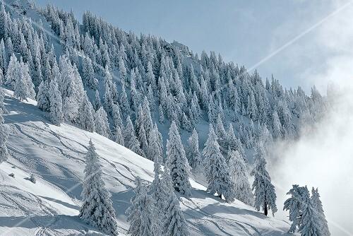 Winterküche, Tannenbäume am Berghang, Schnee, Voralpenland
