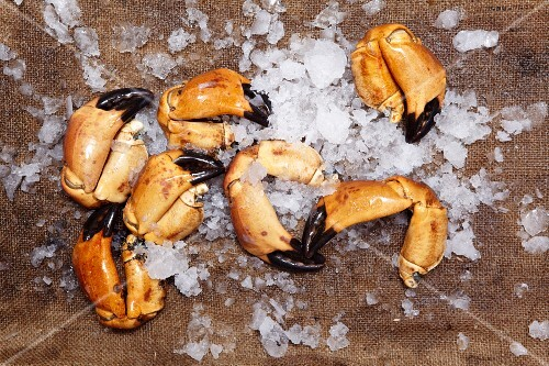 Close-up of claws of edible crabs on ice