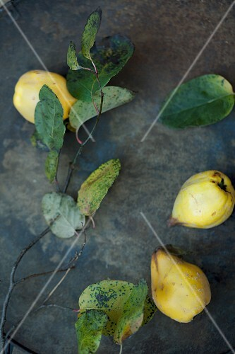 Quinces, twigs and leaves