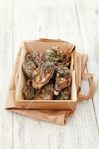 Fresh oysters in a wooden basket