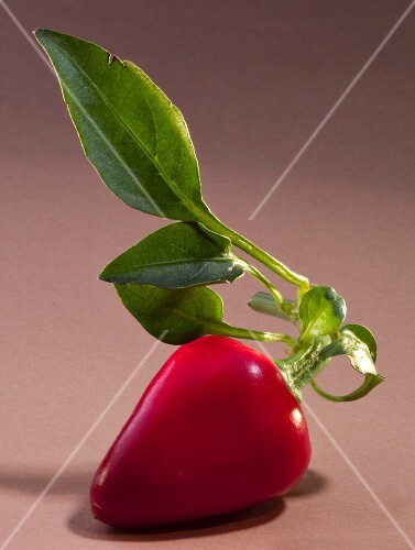 A red chilli pepper with leaves
