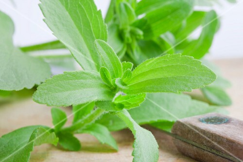 Stevia plant leaves with a knife on a wooden board
