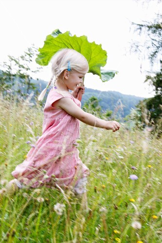 Little blond girl running with a rhubarb leaf through a field