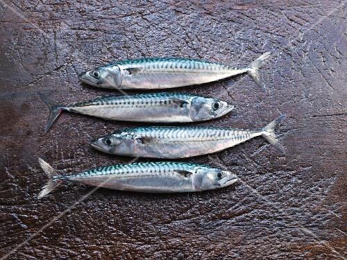 Four fresh mackerels