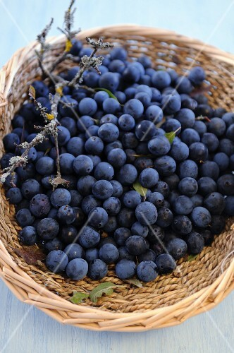 A basket of sloe berries