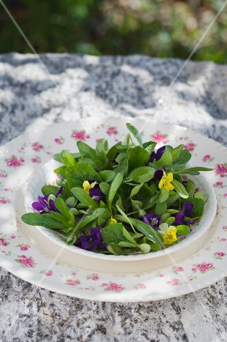 Lamb's lettuce with violet flowers and leaves