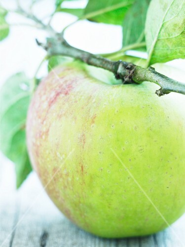 An apple on a twig (Peasegood Nonsuch)