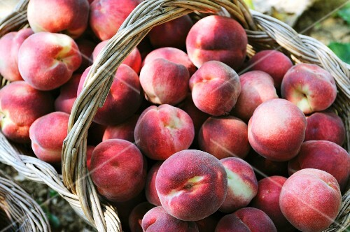 A basket of freshly picked peaches