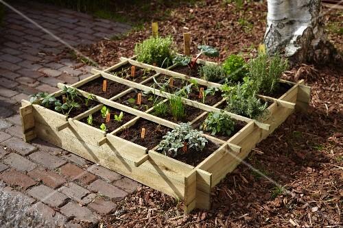 Various herbs and seedlings in a seedling box