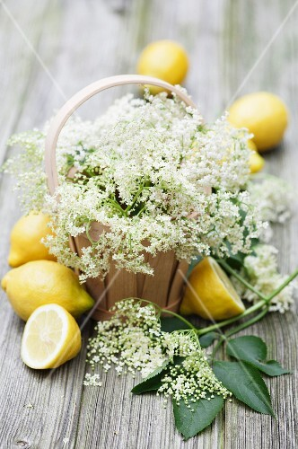 Elderflowers in woodchip baskets with fresh lemons