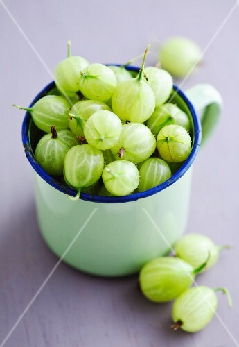 Green gooseberries in an enamel mug