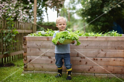 Toddler boy picking plants in backyard