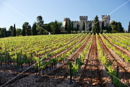 A freshly worked, stony vineyard below the Château des Fines Roches, Winery and Hotel in Chateauneuf-du-Pape