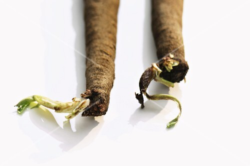 Two black salsify roots
