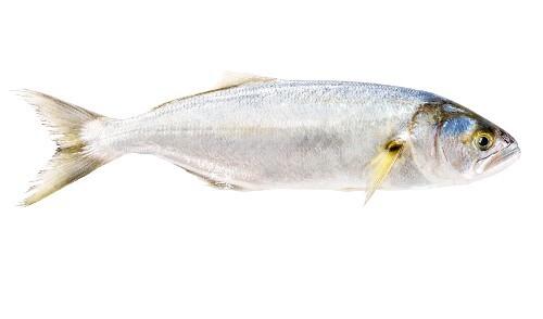A raw fish