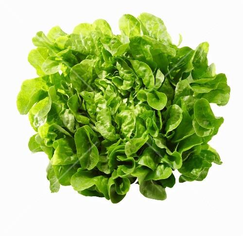 A green oak-leaf lettuce