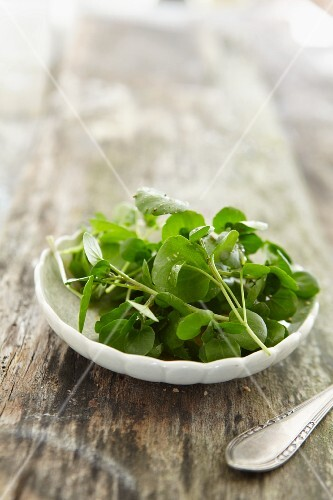 A plate of bittercress