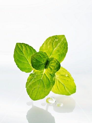 Freshly washed mint
