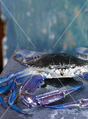 A blue crab (Portunus Pelagicus)
