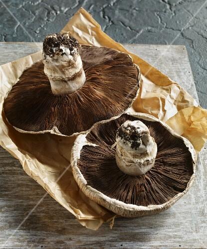 Two Portobello mushrooms on paper