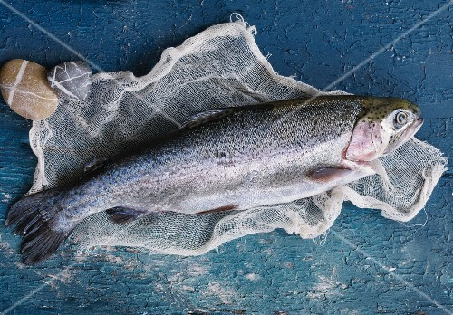 A whole trout (seen from above)