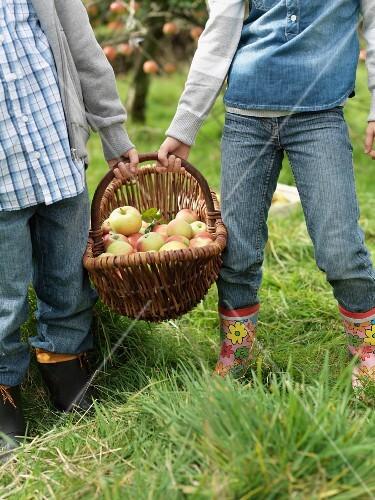 Girl and boy holding apple basket