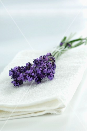 Small bunch of lavender