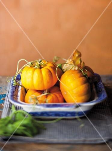 A still life featuring orange-coloured squash