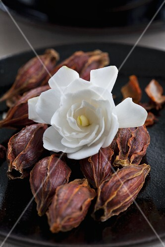 A fresh gardenia flower on top of dried ones