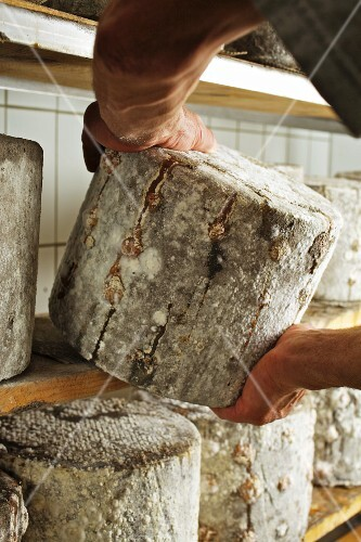 A man place a wheel of goat's cheese with ash on a shelf in a ripening cellar
