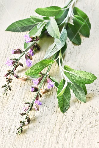 Sage with flowers