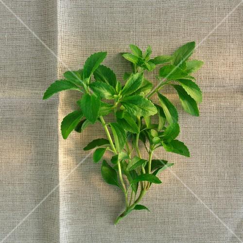 A sprig of fresh stevia on a linen cloth