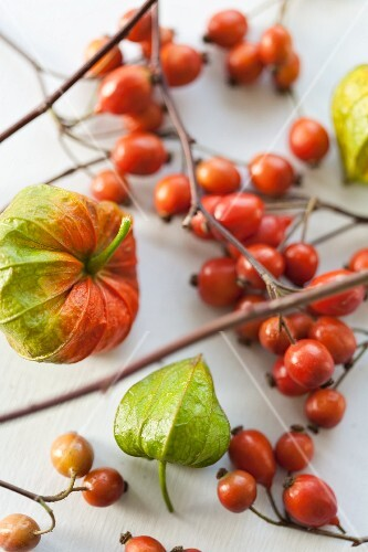 Chinese lanterns and rosehips