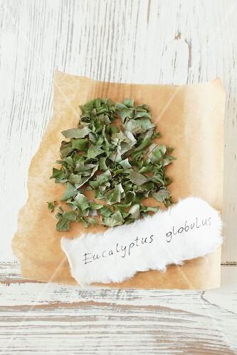 Dried eucalyptus (Eucalyptus globulus)
