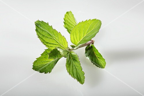 Swiss mint (Mentha spicata Swiss)
