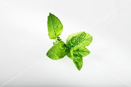 Greek mint