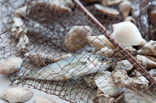 Fishing net with fish and shellfish