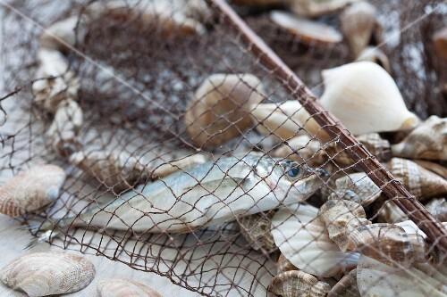 Fishing net with fish and shellfish