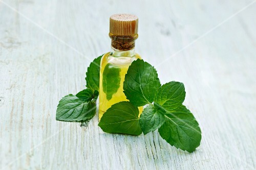 A bottle of mint oil and fresh mint