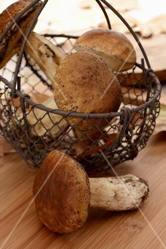 Fresh ceps in a basket