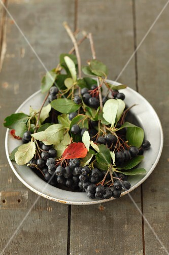 Chokeberries with leaves